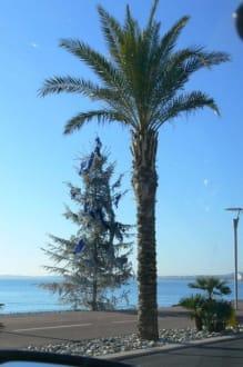 Weihnachtsbaum auf der Promenade - Promenade des Anglais