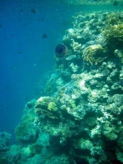 Unterwasserwelt - Schnorcheln Brayka Bay Marsa Alam