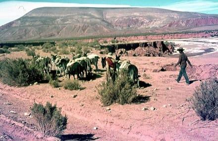 Die Salz-Karawane auf dem Weg nach Bolivien. - Bolivien-Tour