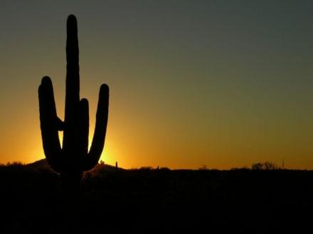 Saguaro NP West - Saguaro National Park