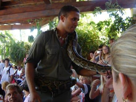Reptilienshow im Oasis Park - Oasis Park