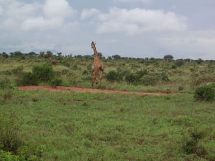 Safari Tour Tsavo Ost - Tsavo Ost Nationalpark