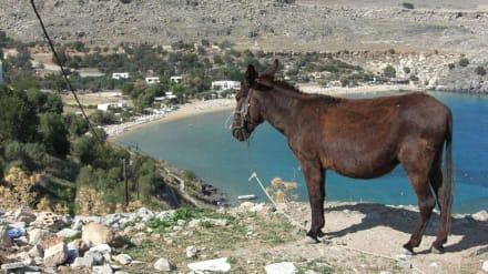Blick zur Badebucht von Lindos - Strand Lindos