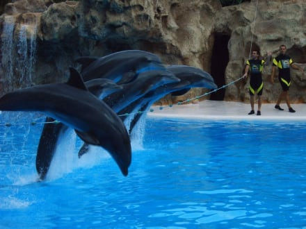 Delphinshow - Loro Parque