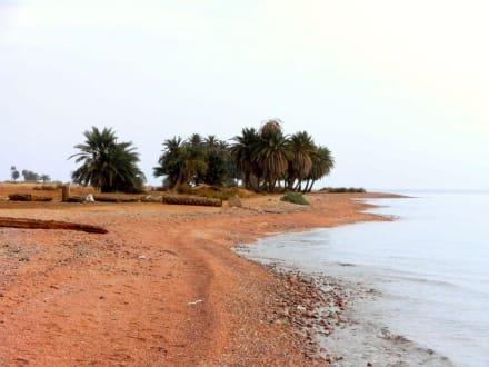 Wüstenstrand Richtung Dahab - Strand Dahab