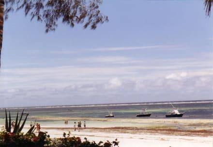 das Riff bei Ebbe - Tauchen & Schnorcheln Diani Beach