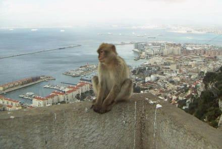 Affenfelsen Gibraltar - Affenfelsen und St. Michael's Cave