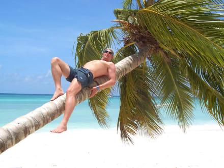 Paradise - Isla Saona