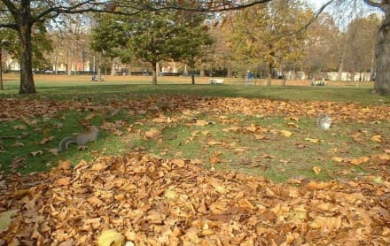 Sonstiges Landschaftmotiv - St. James's Park