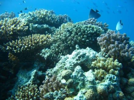Sagenhafte Unterwasserwelt - Jasmin Diving Center