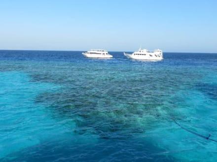 Delfin-Fahrt - Oototo Holiday Service