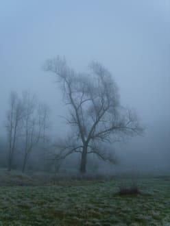 Einsamer Baum im Nebel - Plattling