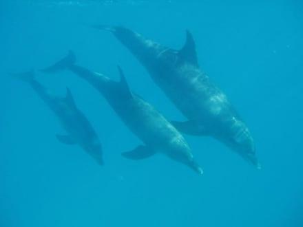 Delfinfamilie - Ausflug mit Mohamed