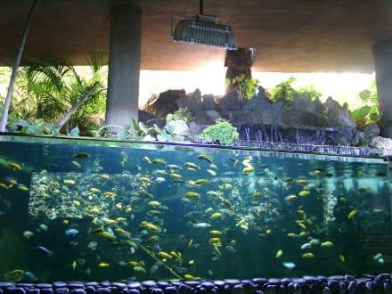 Palmitos Park - Aquarien - Palmitos Park