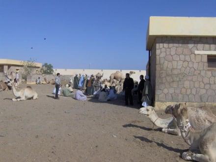 Kamelmarkt - Kamelmarkt Shalateen