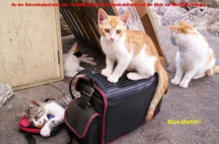 Katzenbabystation der Tierhilfe-Rhodos - Tierhilfestation Rhodos-Stadt
