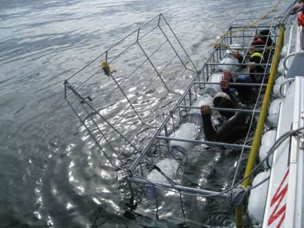 Shark Cage - Shark Cage Diving