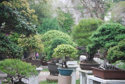 die bonsai b umchen bild garten des verweilens in suzhou. Black Bedroom Furniture Sets. Home Design Ideas