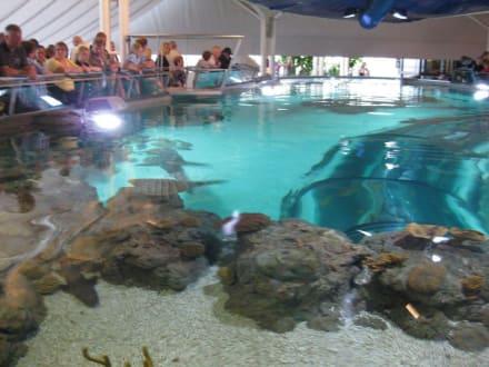 Haifischbecken - Aquarium Kattegatcenter