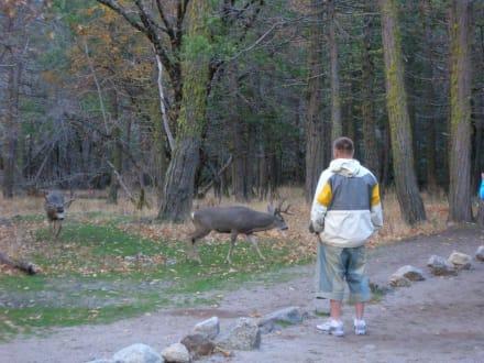 Erste Kontakte knüpfen - Yosemite Nationalpark