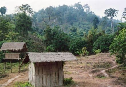 Landschaft um das Elefanten Camp nördlich von Chiang Mai - Elefantenreiten Chiang Mai
