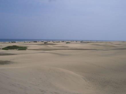 Dünenlandschaft - Dünen von Maspalomas