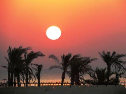 Sunset  -