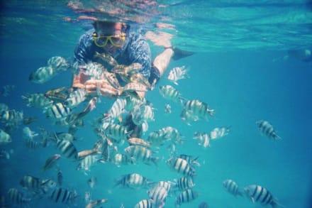 Schnorchelausflug - Schnorcheln Hurghada