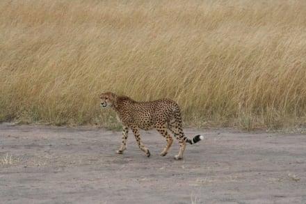 geschaft, endlich Ruhe - Masai Mara Safari