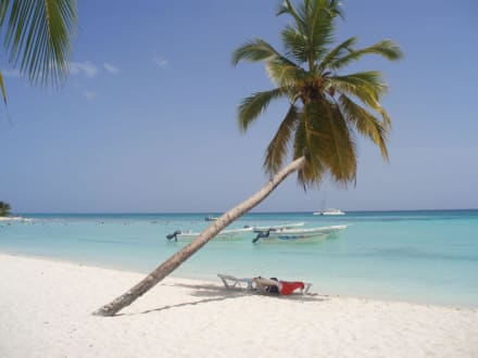 Palme - Isla Saona