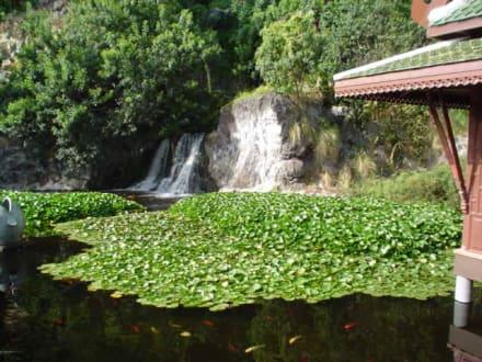 Wasserfall - Loro Parque