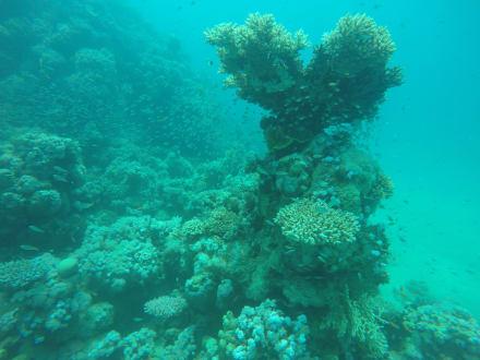 Schnorcheln Makadi Bay - Schnorcheln Makadi Bay