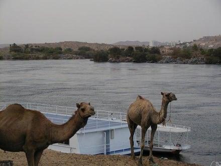 Blick vom nubischen Dorf auf Assuan - Nubisches Dorf