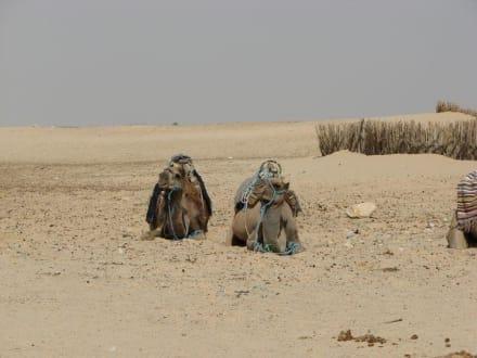 Warten auf die Touris - Saharaausflug