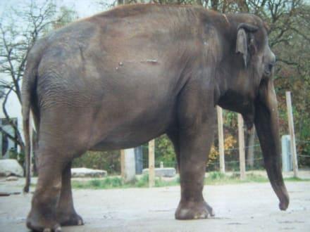 Die Elefantenfütterung ist sehr sehenswert - Tierpark Hagenbeck