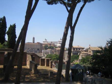 Blick über das Forum - Forum Romanum