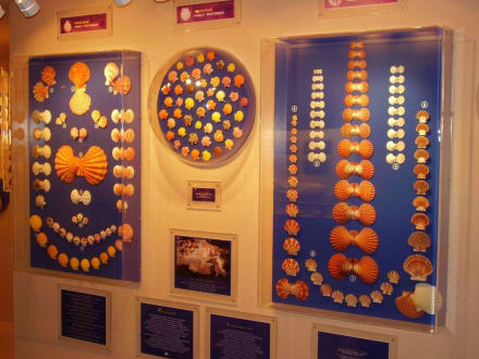 Muschelmuseum - Seashell Museum