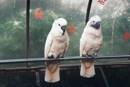 Vogelpark - Gulangyu