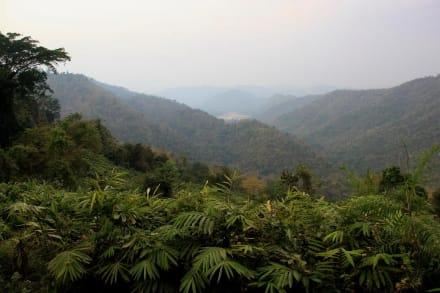 Dschungel - Khao-Yai Nationalpark