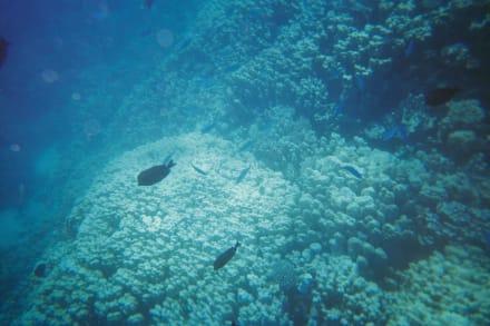 Im Riff - Schnorcheln Marsa Alam