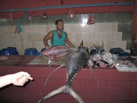 Tunfisch wird zerlegt - Villingili