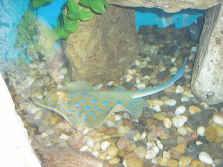 Im Aquarium - Aquarium