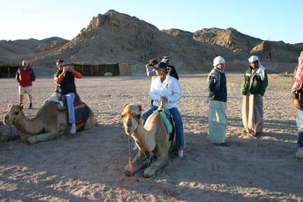 Kamelritt - Wüstentour Hurghada