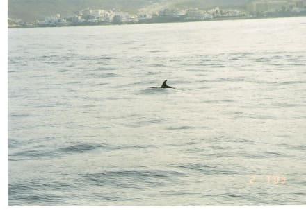 Delphin - Delfin Tour Playa de las Americas