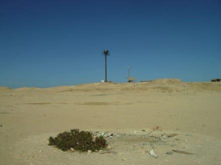 Palme auf dem Hügel ist aus Kunststoff - Giftun / Mahmya Inseln