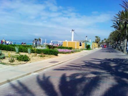 Ballermann 6 In Platja De Palma Playa De Palma Holidaycheck