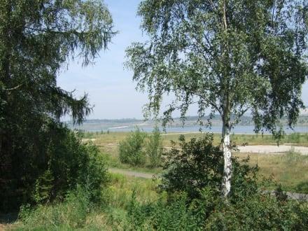 Blick vom Parkplatz zum See - Geiseltalsee