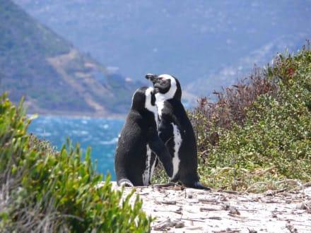 2 Pinguine - Boulders Beach
