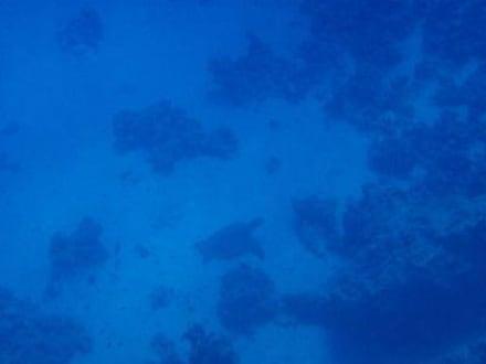 Schildkröte - Tauchen Makadi Bay