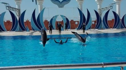 Delfine spielen - Sealanya Delfinpark